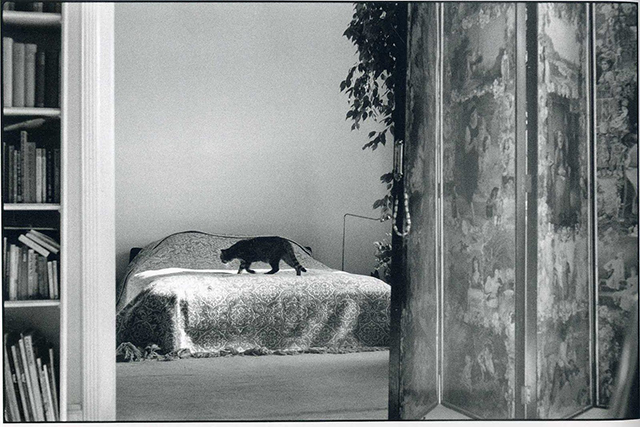 Elliott Erwitt, The Great Cat